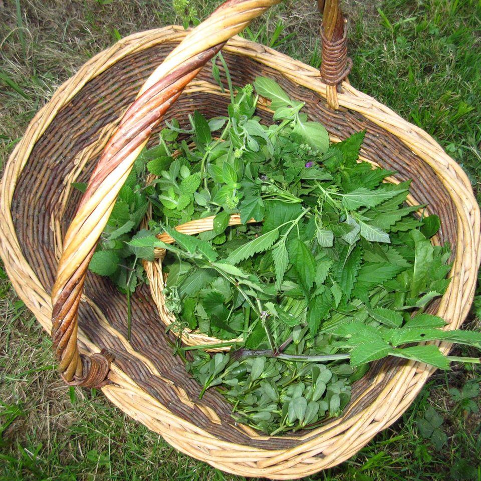 Panier Orties Et Herbes