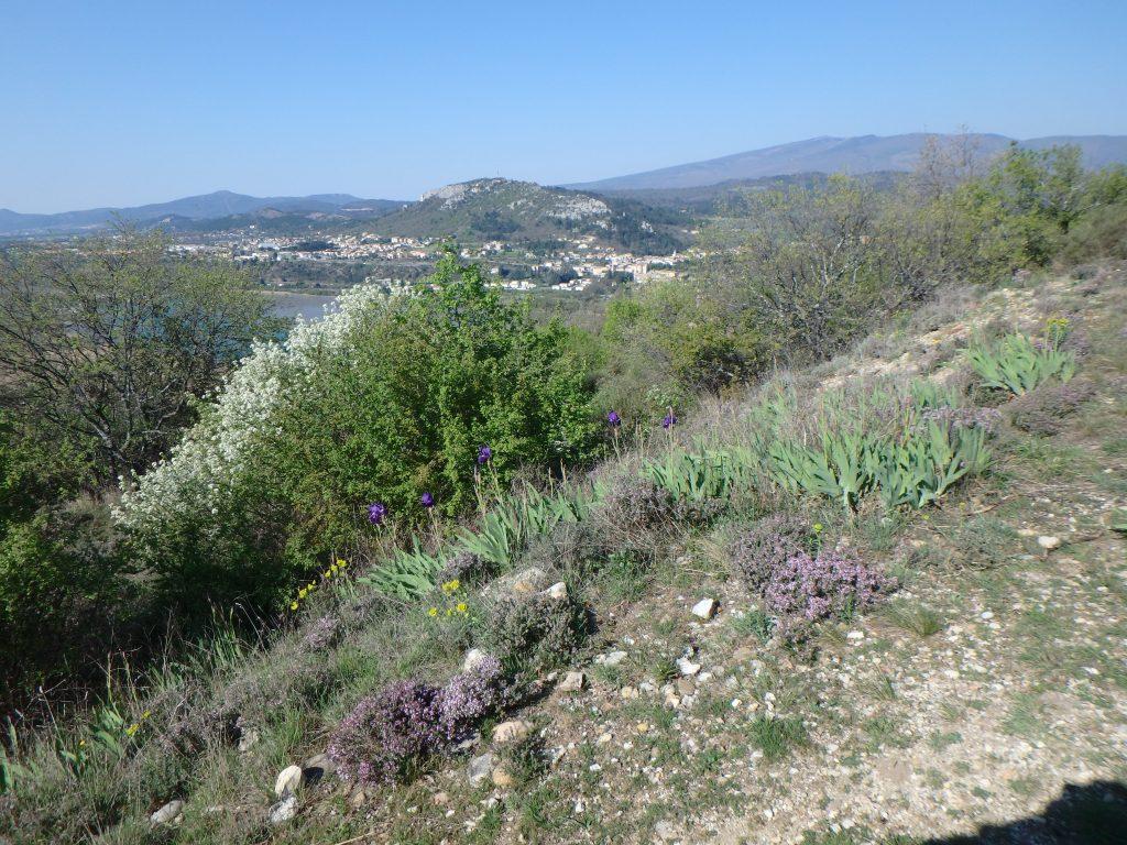 Sentier Botanique De LEscale